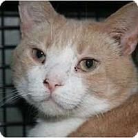 Adopt A Pet :: Butterscotch and Salem - Frederick, MD
