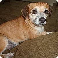Adopt A Pet :: Tinker Belle - Brooksville, FL