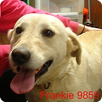 Adopt A Pet :: Frankie - Greencastle, NC