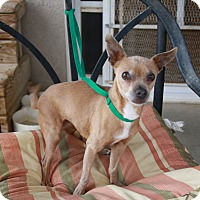 Adopt A Pet :: Genie - California City, CA
