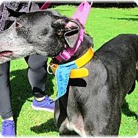 Adopt A Pet :: Evie - Harrisburg, PA