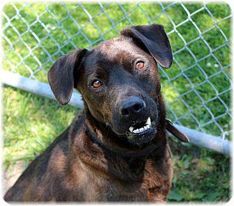 Labrador Retriever Mix Dog for adoption in Welland, Ontario - Pedro