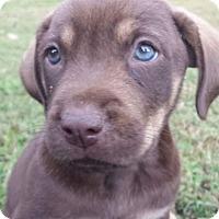 Adopt A Pet :: Jasper - Knoxville, TN