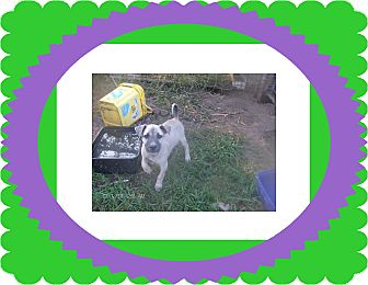 Terrier (Unknown Type, Small) Mix Puppy for adoption in KELLYVILLE, Oklahoma - LOKI
