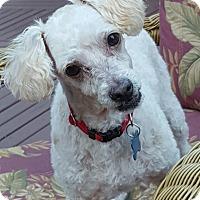 Adopt A Pet :: Jasper - Gig Harbor, WA