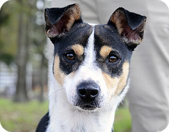 Terrier (Unknown Type, Small) Mix Dog for adoption in LAFAYETTE, Louisiana - BUDDY