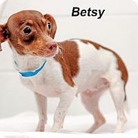 Adopt A Pet :: Betsy - Batesville, AR