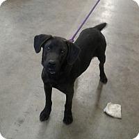 Adopt A Pet :: Lucky - Shelter Island, NY
