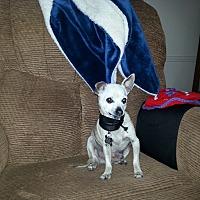 Adopt A Pet :: Ethan - Creston, CA