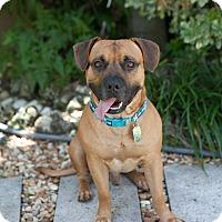 Adopt A Pet :: Samuel - Ft. Myers, FL