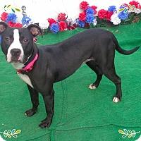 Adopt A Pet :: MIMI - Marietta, GA