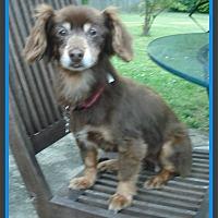 Adopt A Pet :: Tootsie - Newfield, NJ