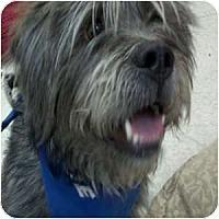 Adopt A Pet :: Kegan - Phoenix, AZ