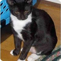 Adopt A Pet :: Zoe - Richmond, VA