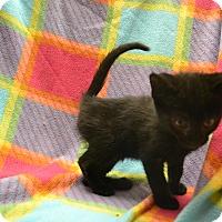 Adopt A Pet :: Scott - East Smithfield, PA