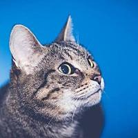 Adopt A Pet :: zz 'TYGEES' courtesy post - Cincinnati, OH