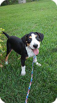 Hound (Unknown Type) Mix Puppy for adoption in Smithtown, New York - Frutti