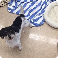 Adopt A Pet :: LEROY - PT ORANGE, FL