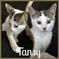 Adopt A Pet :: TansyL - North Highlands, CA