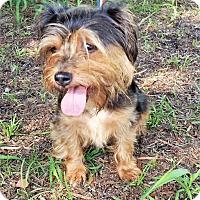 Adopt A Pet :: Aramis - Tavares, FL