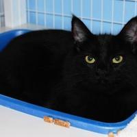Adopt A Pet :: Anakin (was Romulus) 797831 - Hayden, ID