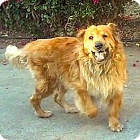 Adopt A Pet :: **Papa**Video** - Pasadena, CA
