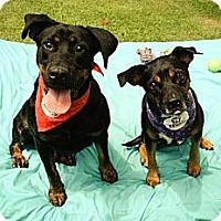 Adopt A Pet :: Pam - Temple, GA