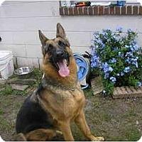 Adopt A Pet :: Buck - Green Cove Springs, FL