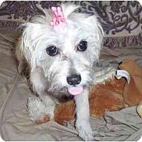 Adopt A Pet :: Samantha - Glastonbury, CT