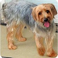 Adopt A Pet :: Brady - Greensboro, NC