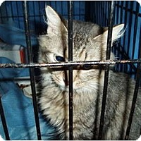 Adopt A Pet :: Abby - Westfield, MA