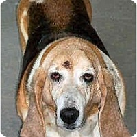 Adopt A Pet :: Imogene - Phoenix, AZ