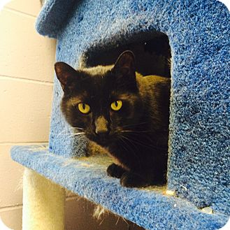Domestic Shorthair Cat for adoption in Oakland, New Jersey - Hamlet
