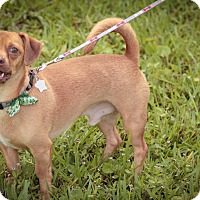 Adopt A Pet :: SYSCO :) - Davie, FL