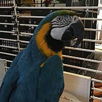 Adopt A Pet :: Shilo - Punta Gorda, FL