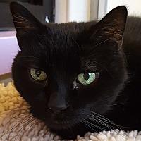 Adopt A Pet :: Cattitude - Grayslake, IL