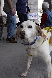 Hound (Unknown Type) Dog for adoption in New Bern, North Carolina - Hippy Lippy