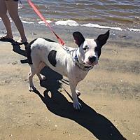 Adopt A Pet :: Pablo - BONITA, CA