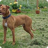 Adopt A Pet :: Huck - Dayton, OH