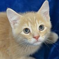 Adopt A Pet :: Prairie 170940 - Atlanta, GA