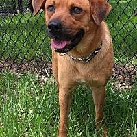 Adopt A Pet :: Fred - A Bonded Pair *F* - Sanford, FL