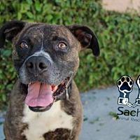 Adopt A Pet :: Kekoa - Fremont, CA