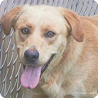 Adopt A Pet :: Roy - Lincolnton, NC