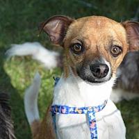 Adopt A Pet :: JiffyPop - N. Babylon, NY