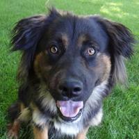 Adopt A Pet :: Carlito - Yakima, WA