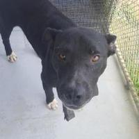 Adopt A Pet :: River - Savannah, TN