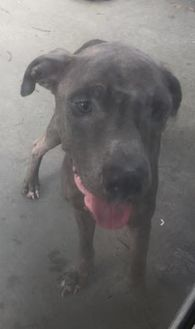 Terrier (Unknown Type, Small) Mix Dog for adoption in St. Thomas, Virgin Islands - WILLY