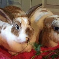Adopt A Pet :: Ivy and Frannie - Waynesboro, VA