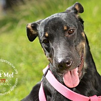 Adopt A Pet :: Kingston - Ft. Lauderdale, FL