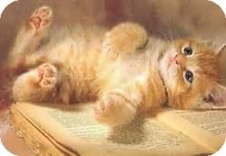 Domestic Shorthair Kitten for adoption in Fremont, Nebraska - Chip
